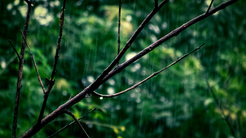 branch-environment-green-751005