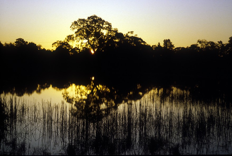 csiro_wetland_robertkerton_1983