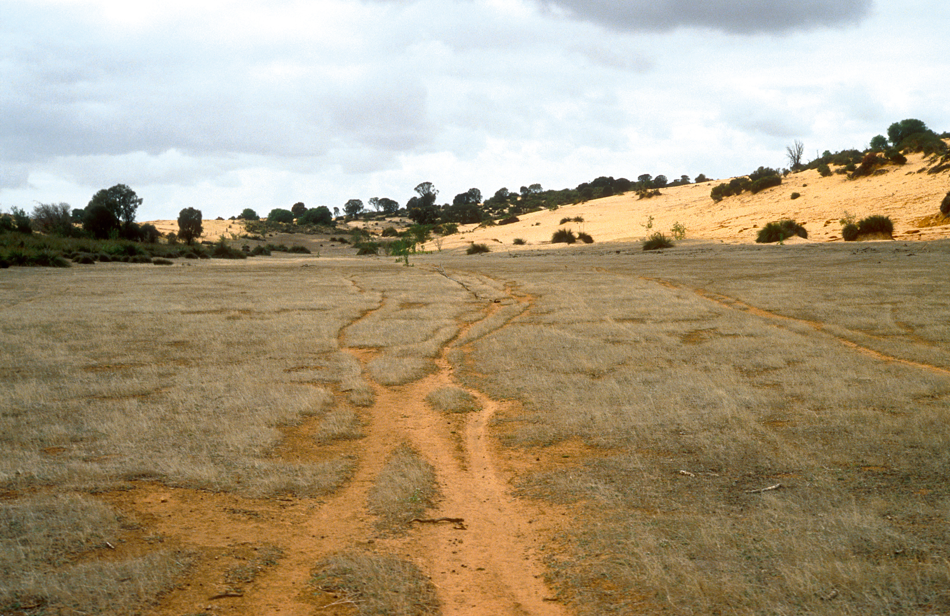 Area cleared of Mallee bushland for grazing and cropping on the Cooke Plains, south-east of Tailem Bend, SA. 1992. (Source: John Coppi)