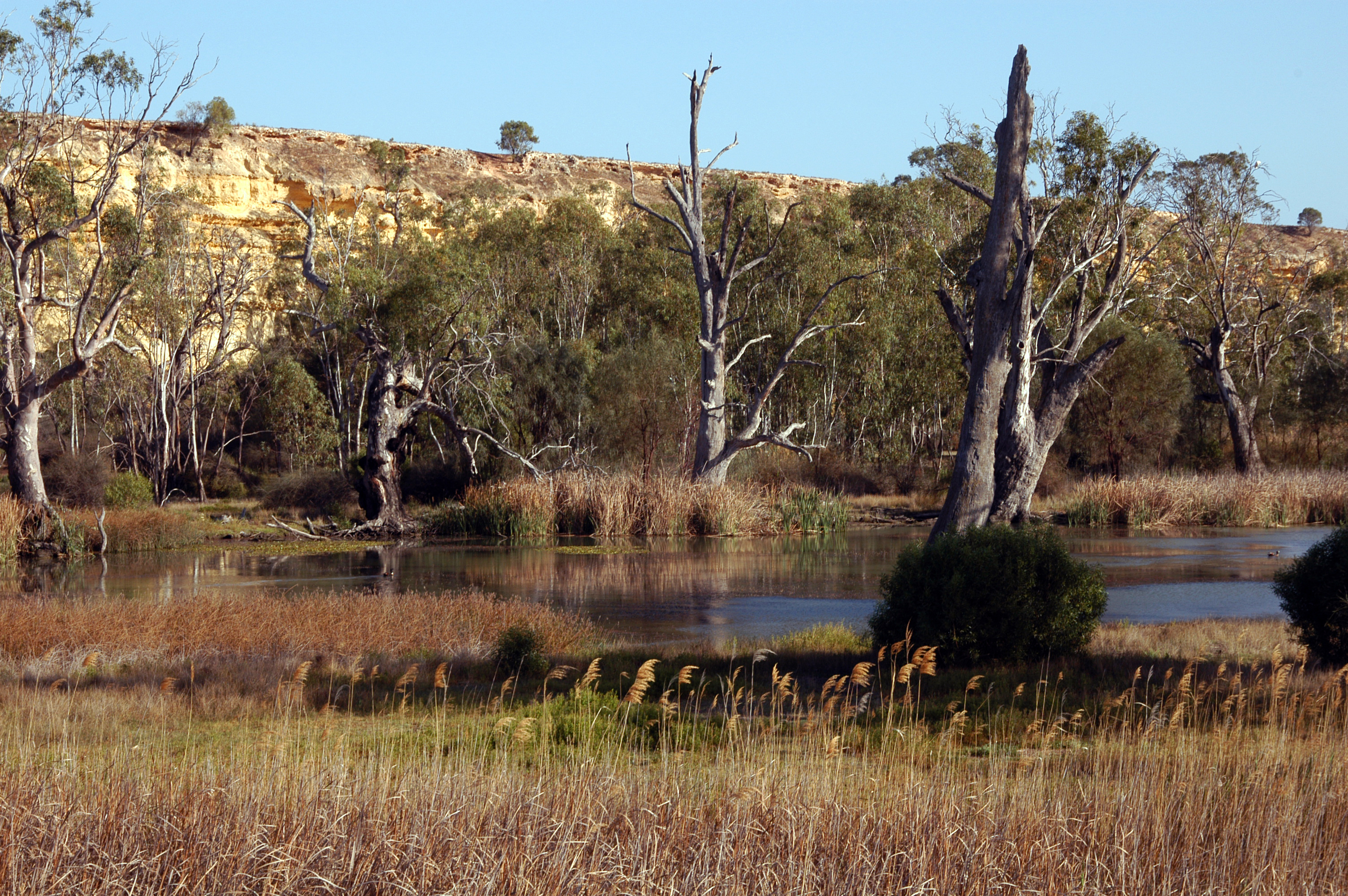 Backwaters of the River Murray above Lock 1 at Murbpook Lagoon, SA. September 2007. (Source: Grig Rinder)