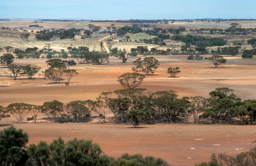 Landscape view of farmland near Bruce Rock in the Western Australian wheat belt. 1981. (Source: Willem van Aken)