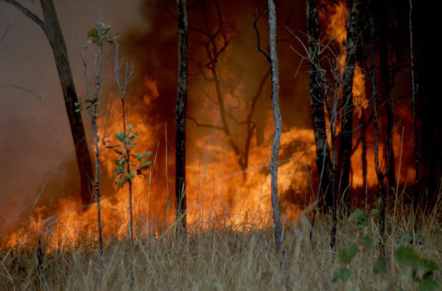 bushfire_CSIRO