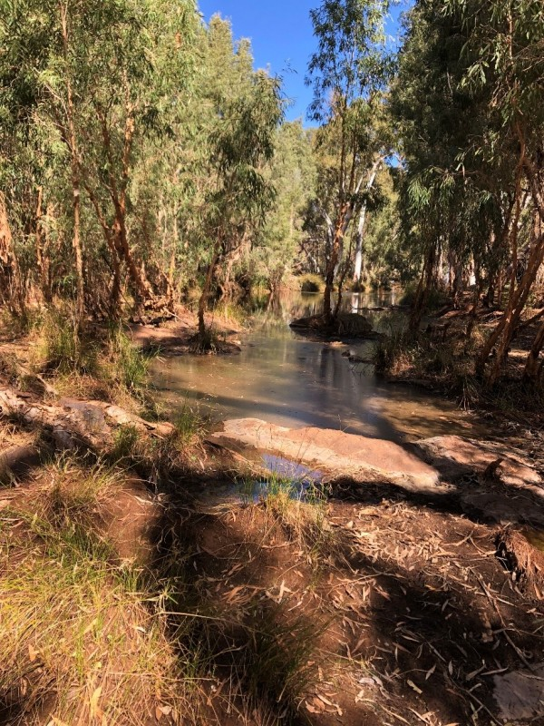 Pools along Weeli Wolli Creek in the Hamersley Basin, Western Australia. Due to groundwater inflows, these pools remain wet all year despite lack of streamflow at the surface. We have developed framework to understand the hydrogeological mechanisms that contribute to this groundwater inflow. By understanding the hydrogeology, we can better manage and protect these valuable water resources. Photo credit: Sarah Chapman.