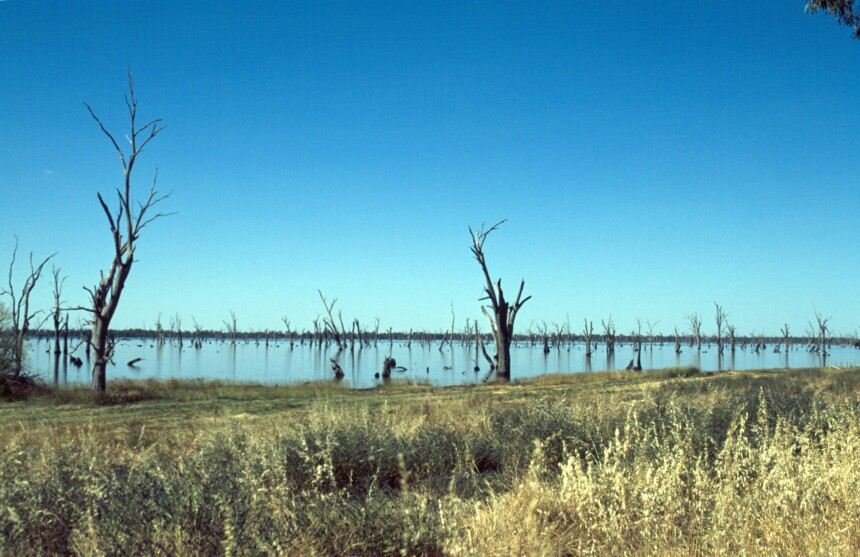Dead trees in lake, near Yarrawonga, Victoria. Source: Carl Davies