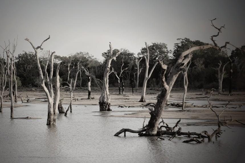 floodplain-pexels-ian-turnell-709542